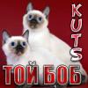 Питомник кошек породы ТОЙ - БОБ Куц
